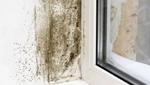 Mould growth on the wall