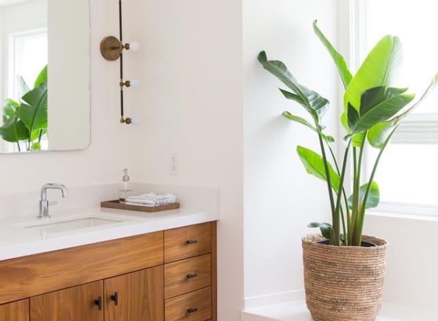 Green leafy plant in a Melbourne bathroom
